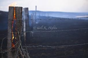 Cypress Grass Fire