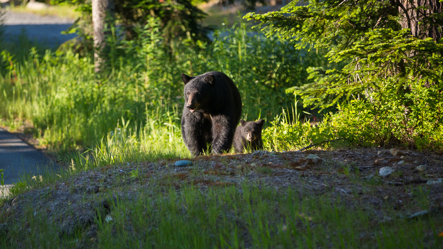 bear and cub at a wedding