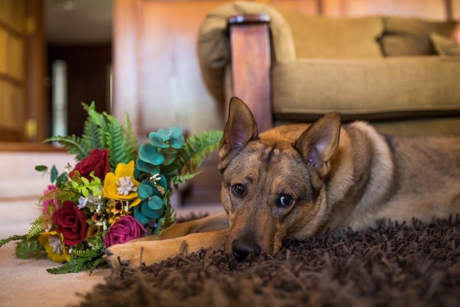 dog holding wedding bouquet