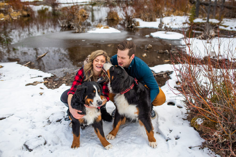 canmore engagements with dogs