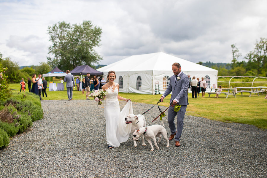 Affinity Guesthouse weddings - vancouver island farm weddings - dogs at weddings