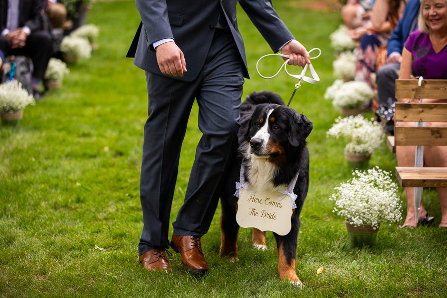 dogs carrying wedding signs