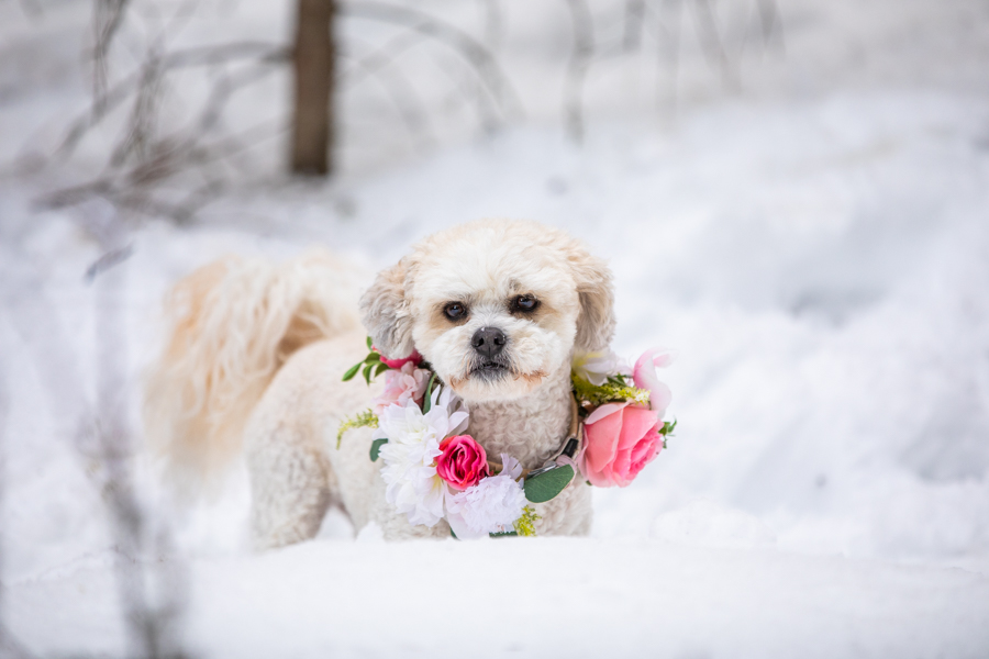 puppy maid of honour