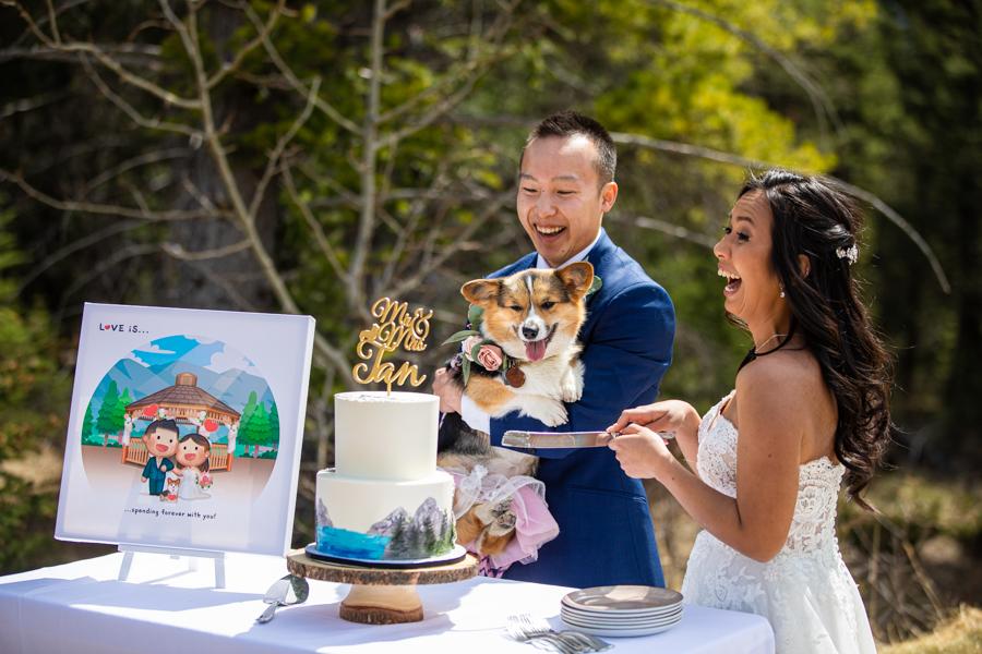 dog eating the cake