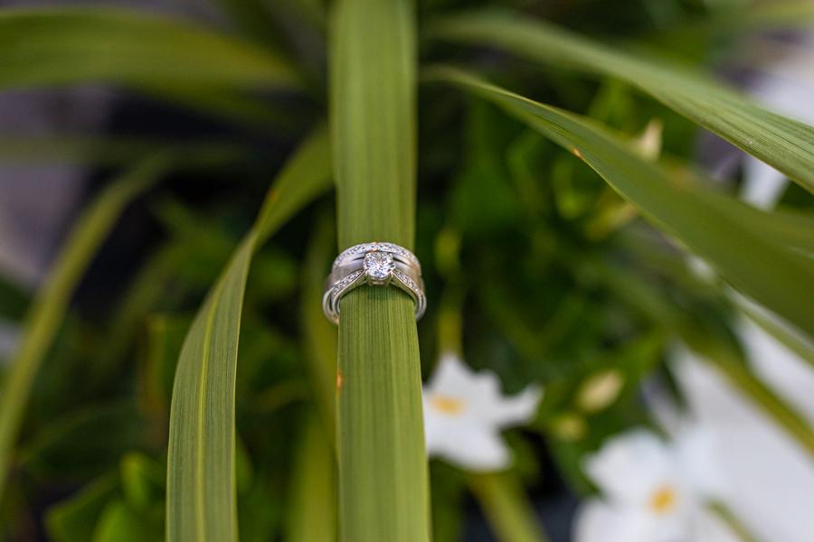 rings sitting on a fern