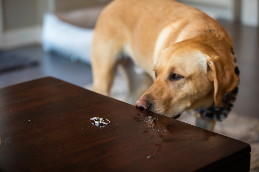 dog trying to smell the wedding rings